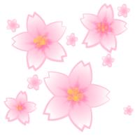 桜といったら何色をイメージしますか?