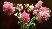 このピンクの花の名前わかる方、教えて下さい。 よろしくお願いいたします。