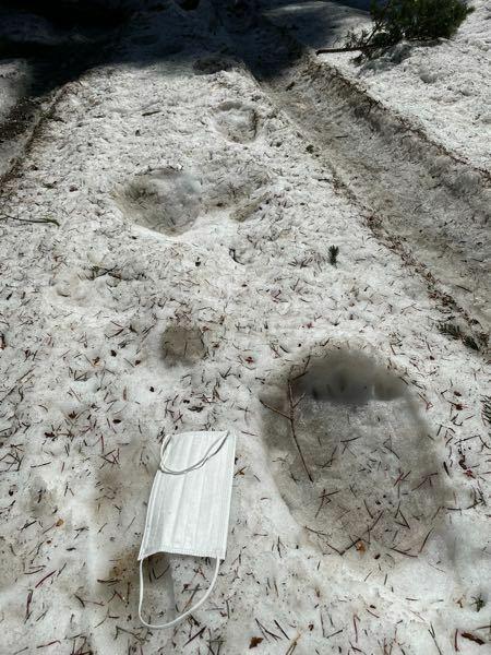 これはヒグマの足跡でしょうか?