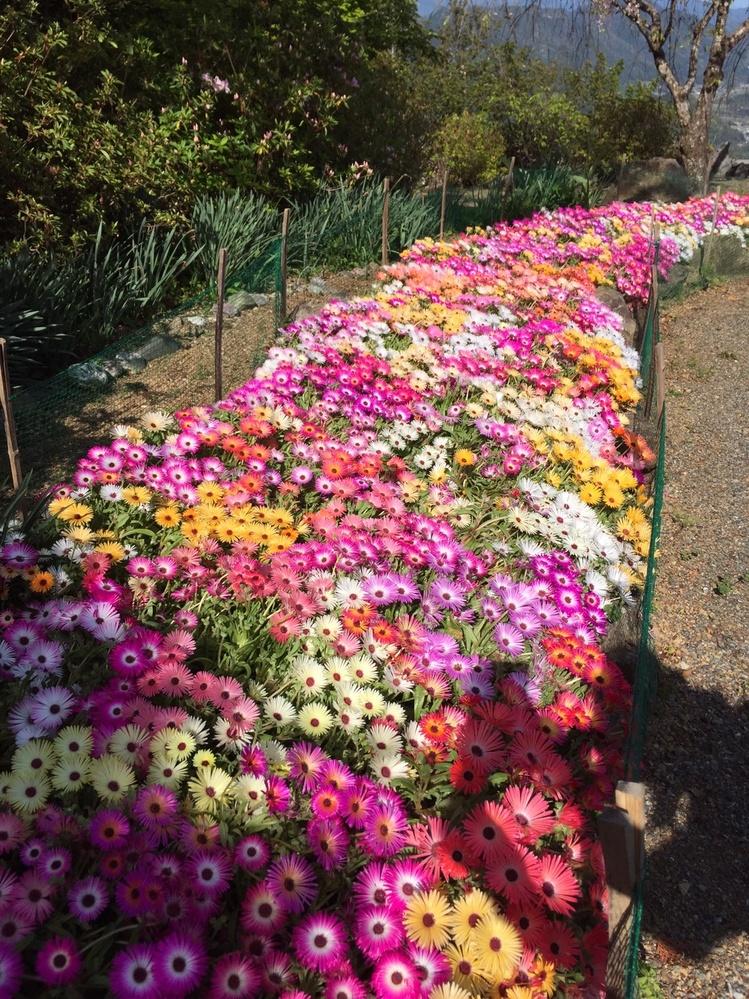 花の名前について 添付してる写真の花の名前を教えて下さい。 よろしくお願いします。
