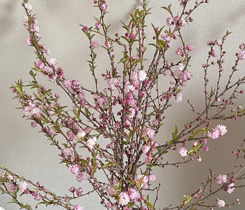 この花の木の名前わかる方いらっしゃいますか?