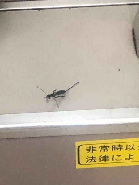 虫に詳しい方教えて下さい!! 少しわかりにくい画像なのですが、教えてください!! 何の虫ですか?? 電車にこんな虫がいました。 当たってしまって、毒のあるような虫なら心配です! また、極度にゴキブリが苦手な為、ゴキブリがどうかもかなり不安です。ゴキブリとは形が違うような気がするのですが…。 ○割と長い触覚がウネウネ動いてました ○体の大きさは、2〜3センチくらい、割と大きめ ○体はと...