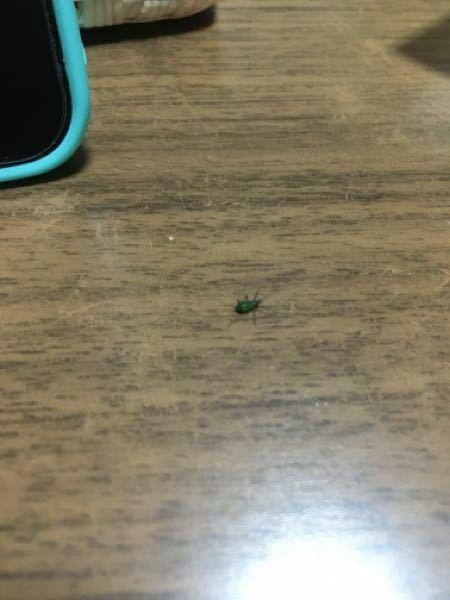 この虫ご存知ですか?特定の場所に大量発生しています