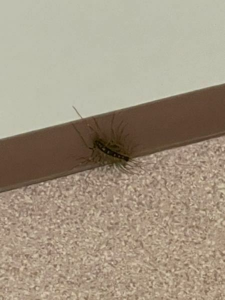 【虫 閲覧注意】 大学のトイレにいたんですけど、これなんていう虫ですか?足いっぱいあるからムカデのなかまとかですかね?