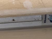 これなんていうクモですか?駆除した方がいいですか?