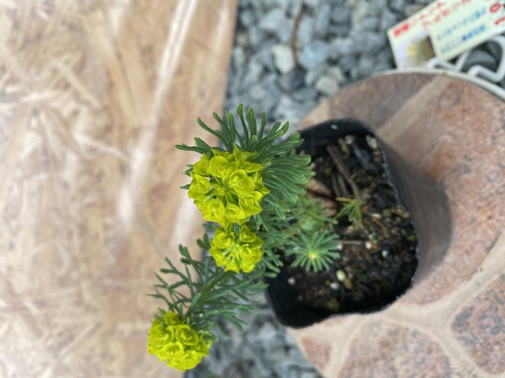 この花の名前を教えて下さい。 宿根のようですが名前が分かりません。 どなたかわかる方お願い致します。