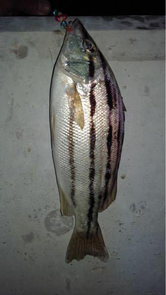 この魚は何という名前なのでしょうか。