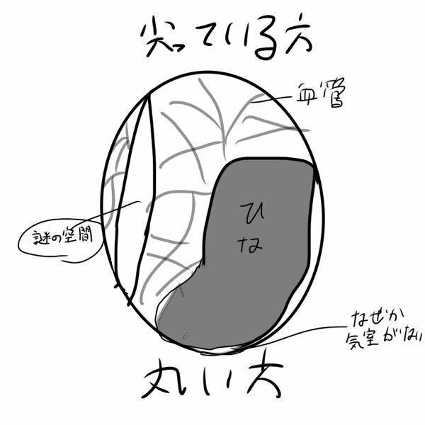 鴨の卵を温めて今日で20日目になるのですが少しおかしいのです。図がわかりにくかったら申し訳ないのですが、図のように卵に気室が無く、縦に変な空間があります。その空間には血管も何も無く気質のように光を通しま す。この空間が現れたのは18日目で、その空間がだんだん大きくなっているような気がして心配になってきました。この卵は無事に孵化できるでしょうか。