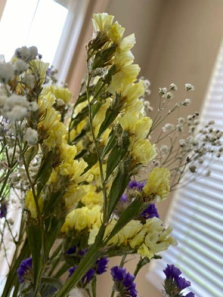 この黄色の花の名前はなんでしょうか?