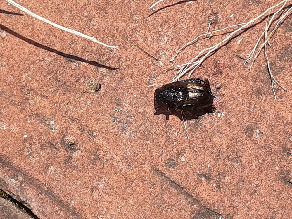 この虫はなんですか? 庭にたくさんとんでます!
