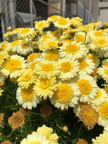 添付画像の植物の名前を教えてください。本日撮影大阪です.