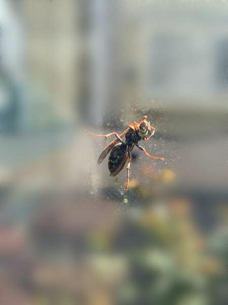 これはアシナガバチでしょうか??