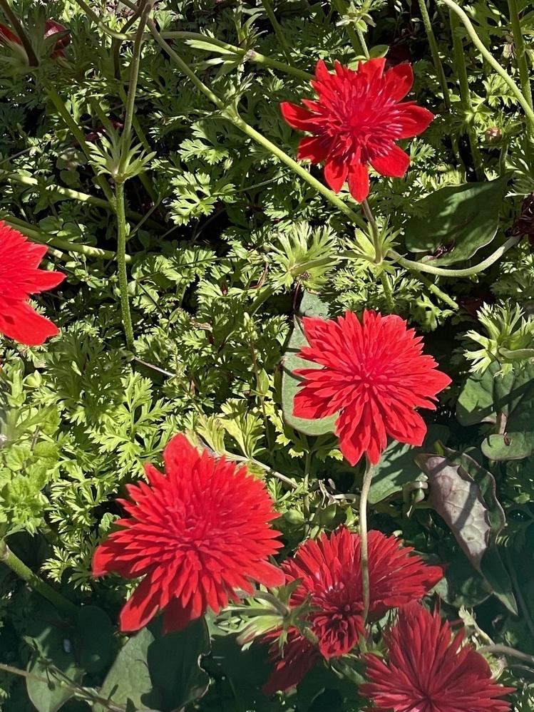今日、散策してたらこんな花を見つけました! 誰も知らないので誰か知りませんか?