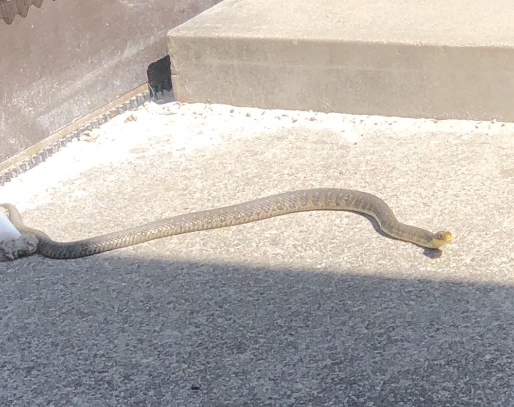 この蛇は何蛇?毒ありですか?