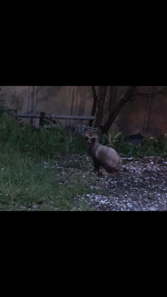 この動物が何かわかる方いらっしゃいませんか? 最近、自宅の周辺で遭遇します。