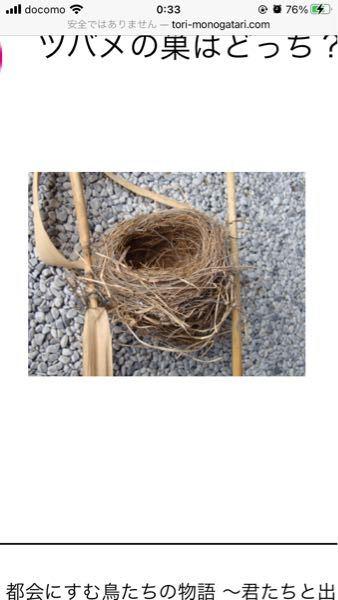この巣はなんの鳥の巣でしょうか……?ツバメの巣との比較で出されていたものなのですが、何の鳥の巣なのかは記されていなくて困っています。わかる方がいらっしゃいましたら教えて頂きたいです。