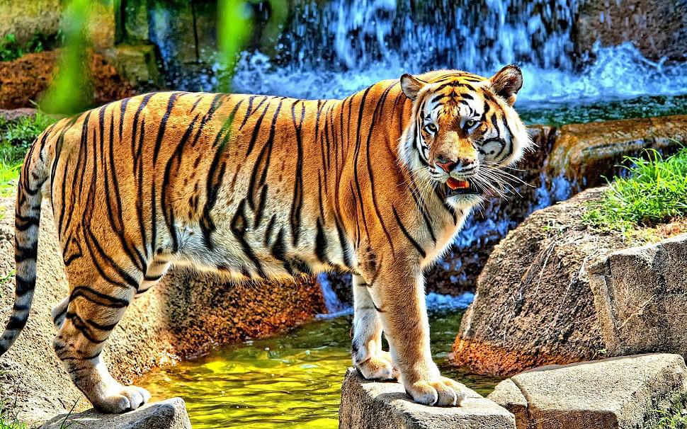ベンガルトラ最大最強個体より強いインドの猛獣は何ですか?