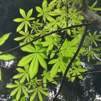 植樹の名前を教えてください、 岐阜県美濃加茂市杁ヶ洞池で、