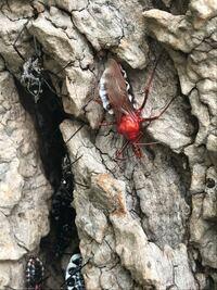 この昆虫の名前何ですか?