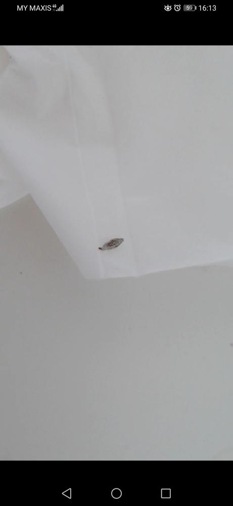 マレーシア在住です。 この虫が気になって仕方ありません。どなたかご存知ありませんか? 壁についていたり、床に落ちています。 蛾になるのか、それともこれで成虫なのか、移動方法は這っているだけなのか、など知りたいです。