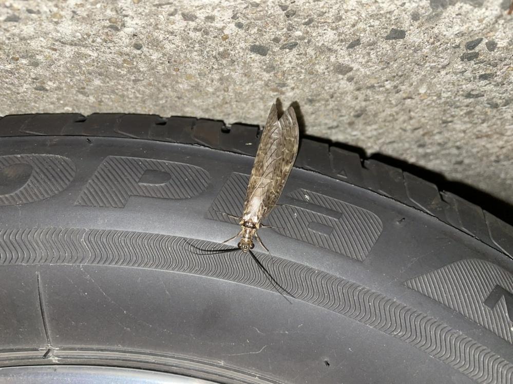 画像の虫の名前を教えて下さい。