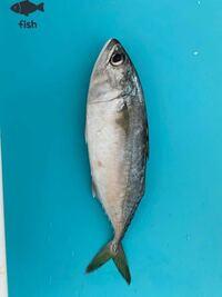 この魚の名前、美味しい調理方法を教えてください! ちなみに、シンガポールの魚です! 口はかなり大きいです。