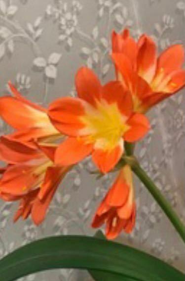 なんという花ですか?