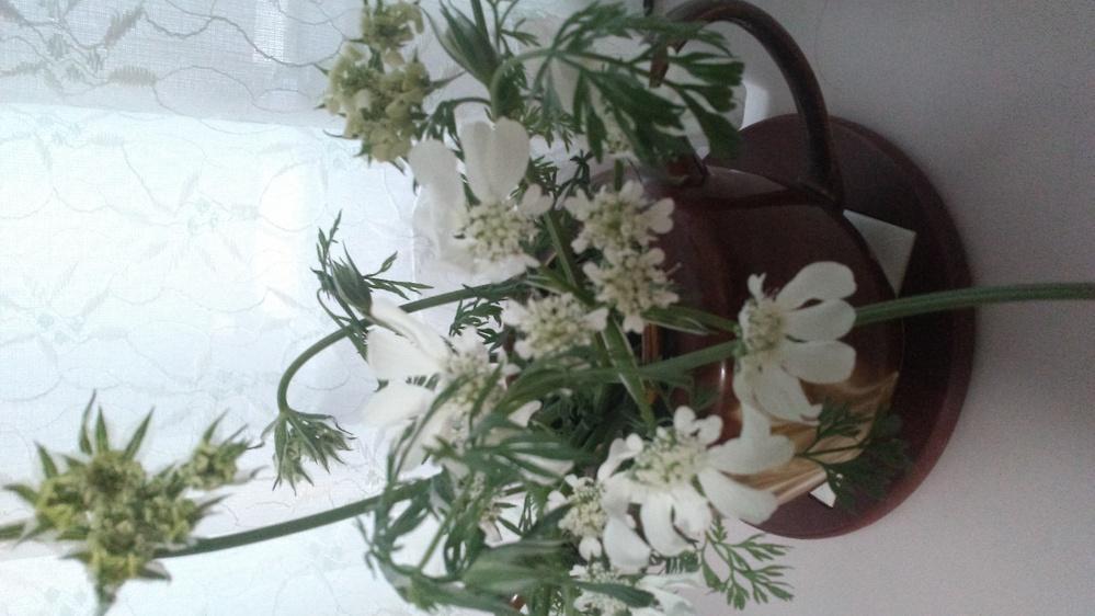 この花の名前を教えて下さい。ご近所から戴いたものなのですが、ご本人も自分も名前が判りません。 《知らないでそのまま**》というのも、何となく花に申し訳が無いような気がします。よろしくお願いいたします。