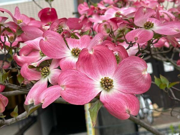 これは何という名前のお花でしょうか?