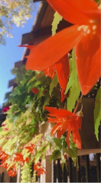 これって何の花か分かりますか?? もし分かったら花言葉とかも教えてください!!