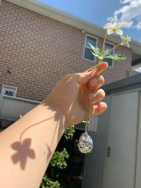 この写真の構図はどうでしょうか。 デッサンしようと思っております。 やはり花が生かされていないでしょうか。 ご意見お待ちしております。