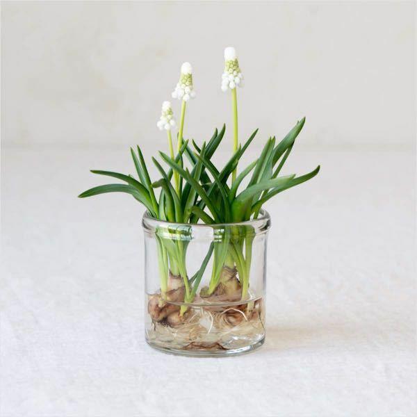 これは何の花?ですか?