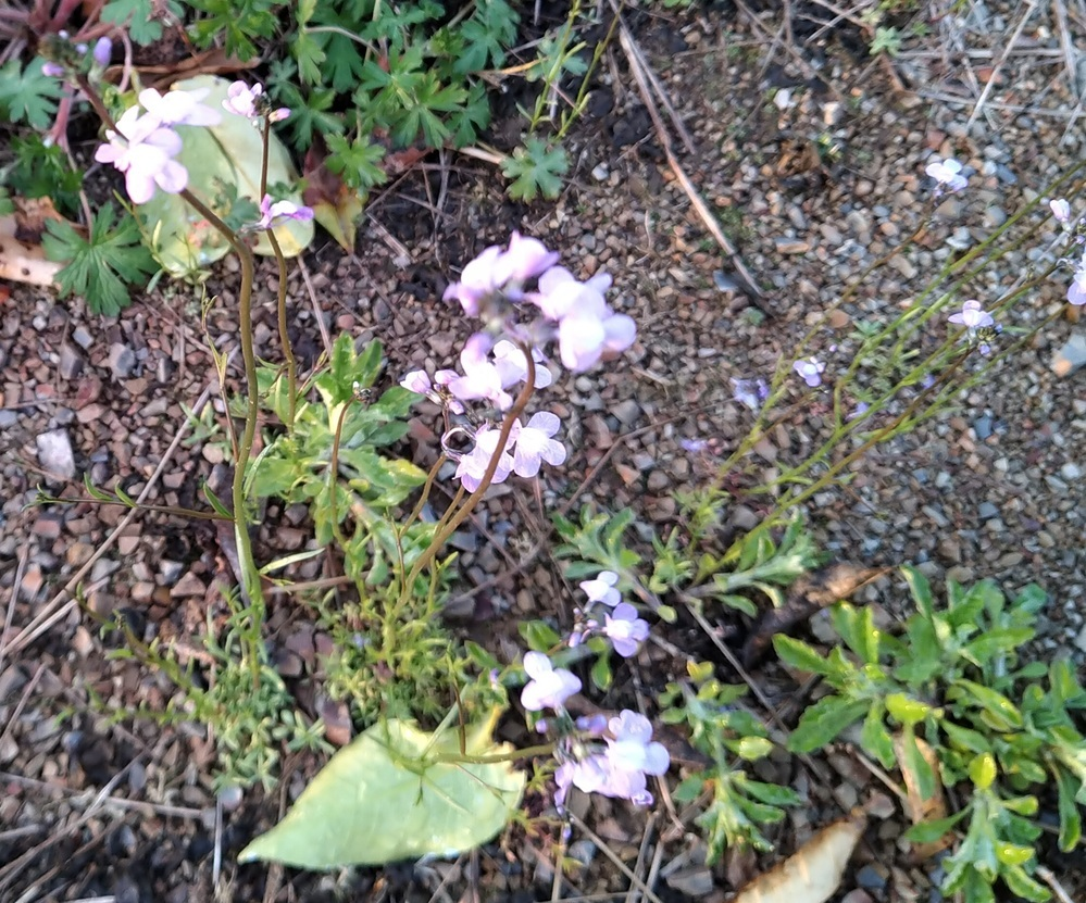 この花は何という花でしょうか? わかる方、よろしくお願いします。