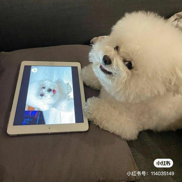 この犬は何の種類の犬ですか? わかる方教えてください。