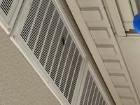 アシナガバチについてです。 24時間以上もベランダの同じところで一匹でじっとしています。広島に住んでいるのですが、最近暖かかったのに昨日今日と寒くなったから冬眠みたいな事をしてるのでしょうか? 向きを変えたりはしてるみたいですが、この場所から動きません。写真はベランダの天井です。