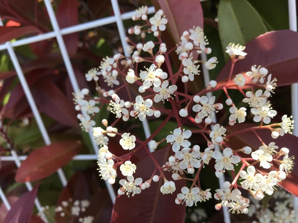 この木の花名前 教えて下さい。