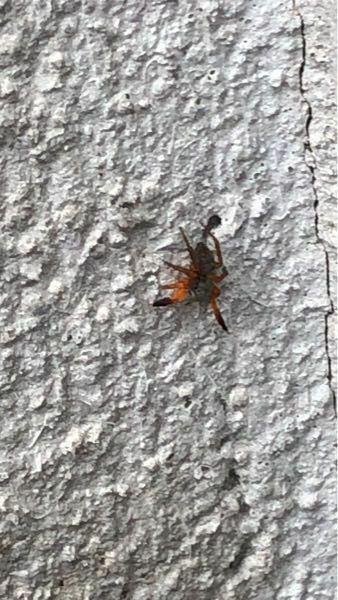 この写真の蜘蛛ってなんていう名前の蜘蛛なのでしょうか? 家の壁にいました。