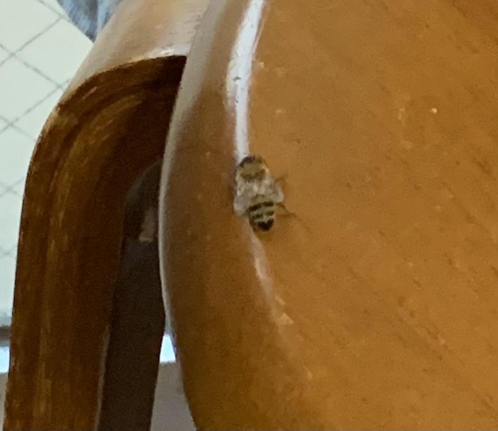 この虫って危ないですか?蜂みたいだけど小さいんですよね、、、。どうしようもできなくて困っているので教えて下さい泣