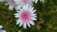 この花の名前をご存じの方、いらっしゃいますでしょうか? いま満開です。