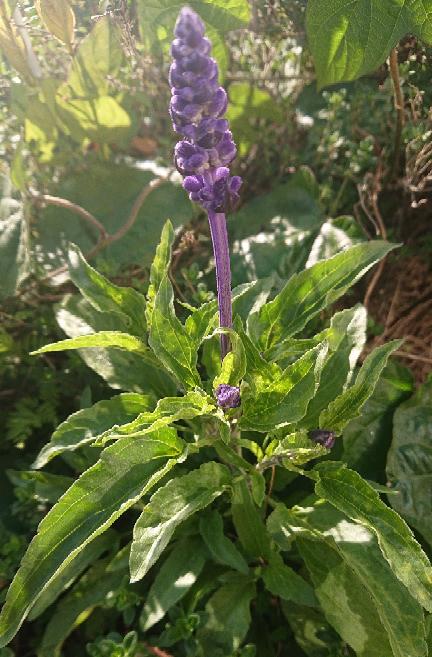 画像の花の名前を教えてくれませんか?