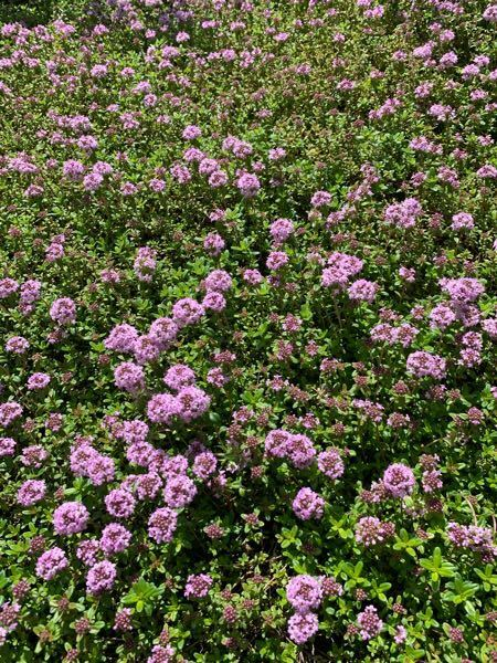 花の名前わかる方教えて下さい。 よろしくお願いします。