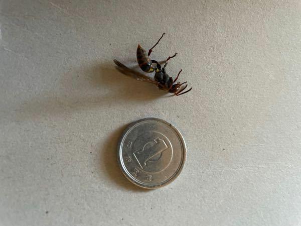 至急お願いします!! この蜂は毒がありますか? 洗濯物を取り込んでいたところ、刺されました。 以前一回だけ地蜂に刺されたことがあります。 アナフィラキシーショックとか大丈夫でしょうか? わかる方いらっしゃったら至急教えてください!