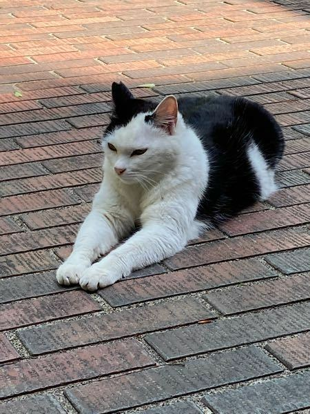 学校にいる猫の腕周りが太く感じるのですが、これは肥満によるものでしょうか?