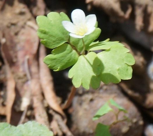 茨城の里山で見かけたこの植物の名前教えてください。