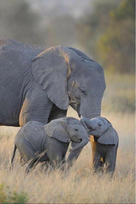 『象』は、好きですか?