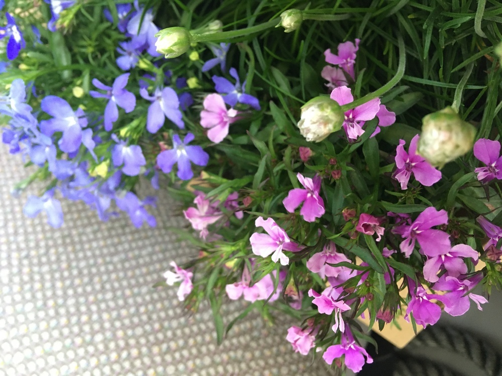 この紫系のお花はなんという名前ですか??? 白もありました*