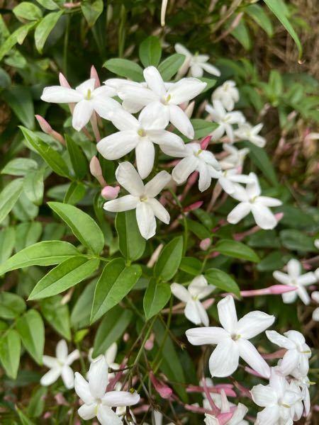 この花の名前を知ってる方教えてください。
