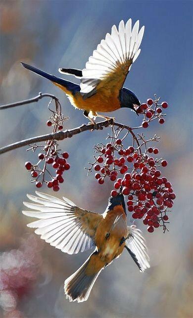 鳥になった気持ちで、どんな味だと思いますか?
