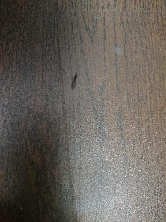 このような虫が家のなかで大量に発生しました。 虫の種類、駆除方法を教えて下さい。 今は地道に掃除機で吸い込んでいます。