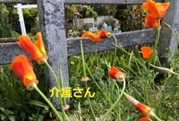 この花の名前は何でしょうか? 撮影場所は兵庫県で撮影日時は2021年4月18日です。